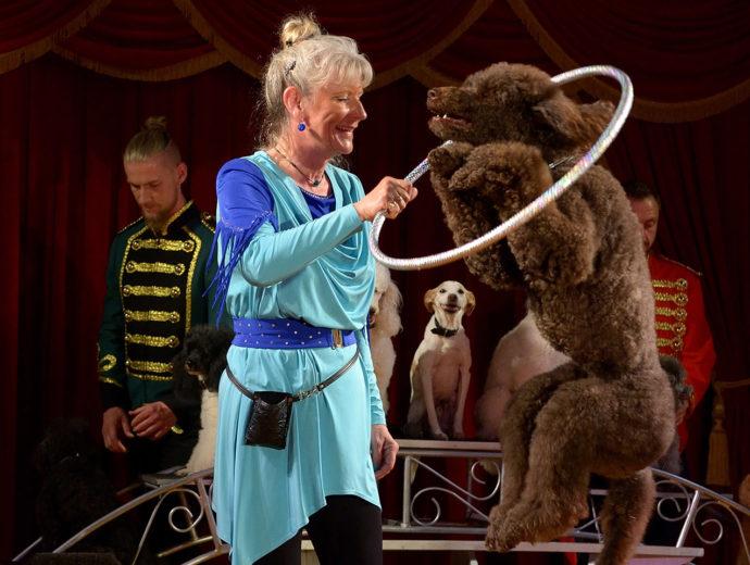 roskilde_marked_cirkus_mascot_hunde